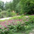 Kleiner Garten und Pflanzungen